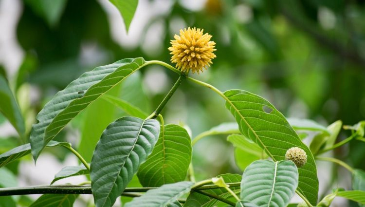 9 Tips To Boost Your Kratom Powder And Grow